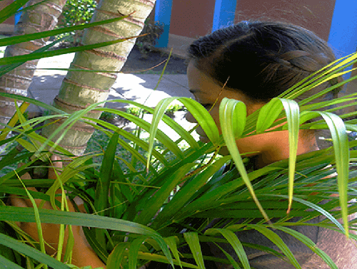 Image of girl behind palm plant in Nicaragua